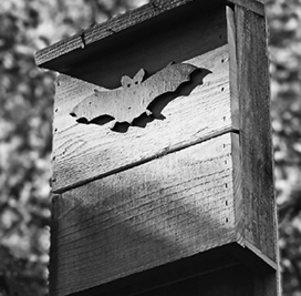 BMN Bat Monitoring at Colony Farm Regional Park @ Colony Farm Regional Park | Port Coquitlam | British Columbia | Canada