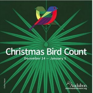 Audubon Christmas Bird Count in the TriCities
